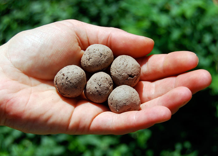 A hand holding seed bombs